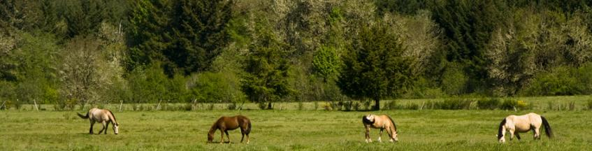 Horses at Ritner Park, Photographer: Janeen Thomson